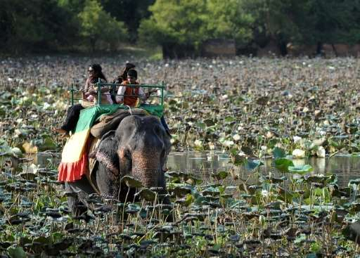 Sri Lanka elephant owners must take their elephants for daily walks of not less than 5km