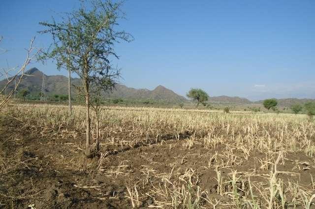 Staving off famine in Ethiopia