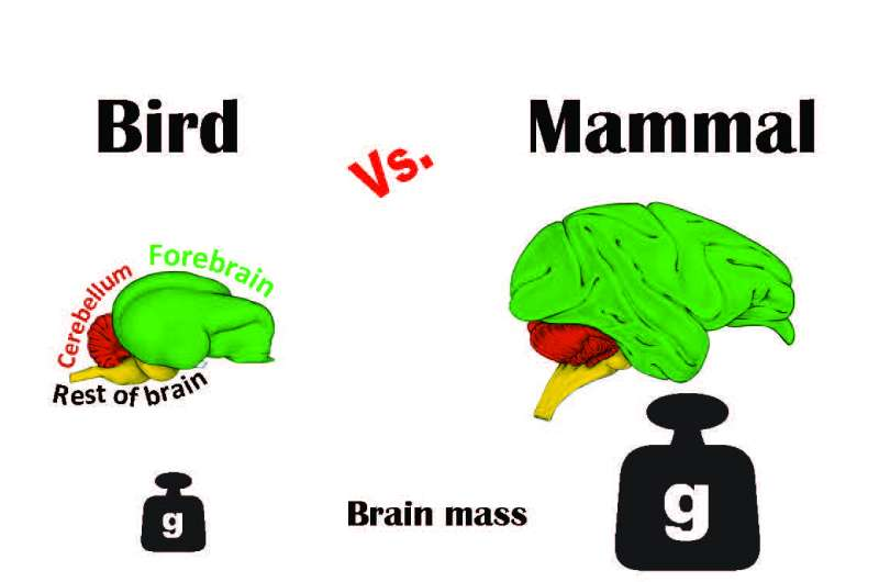 Study gives new meaning to the term 'bird brain'