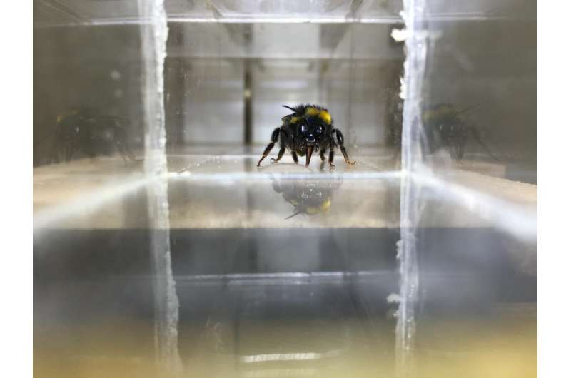 Sugar gives bees a happy buzz, study finds