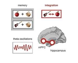 Synchronized brain waves in distant regions combine memories