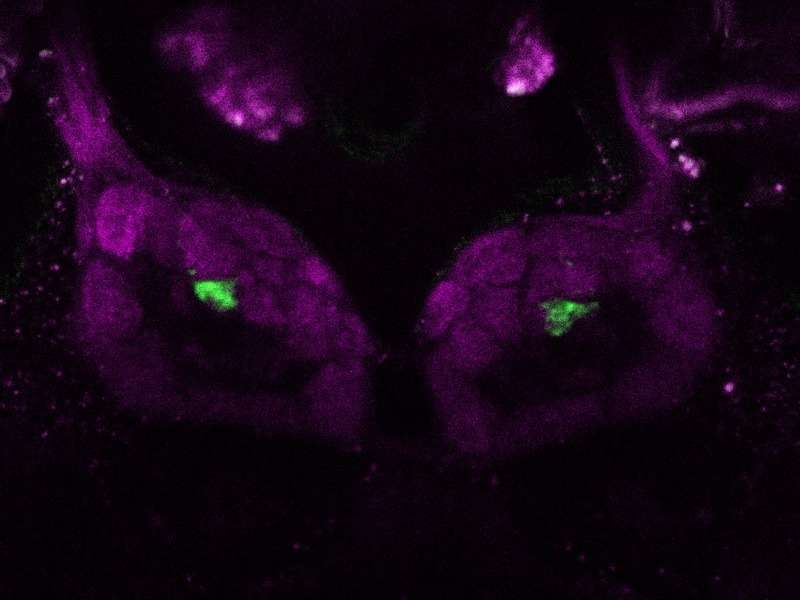 The basic units of the olfactory system in the fly brain provide references to their function and ecological relevance