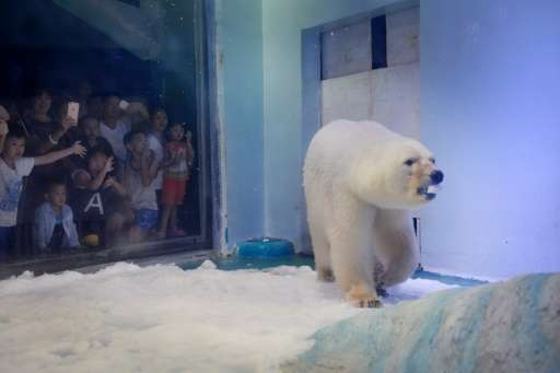 The bear named Pizza is one of 500 species kept in a zoo inside the mall in the southern Chinese city of Guangzhou