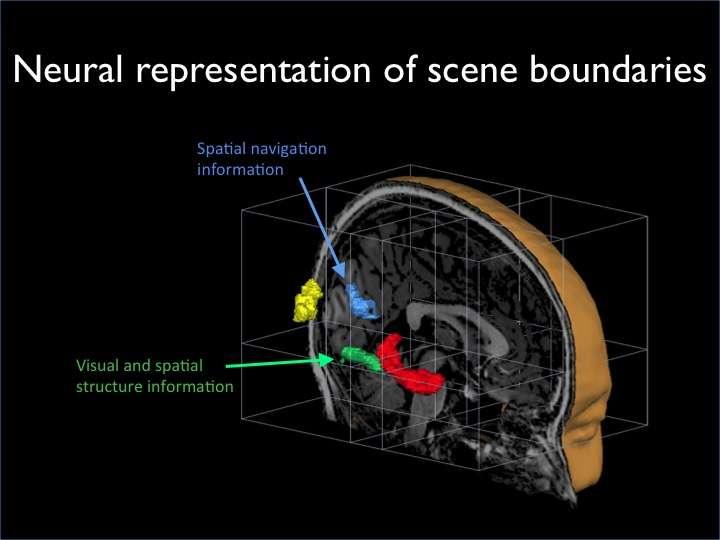 The brain's super-sensitivity to curbs