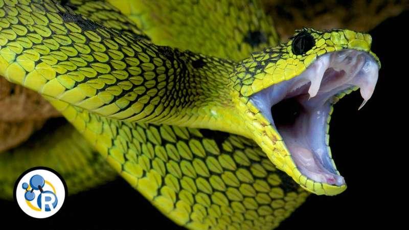 The chem-hiss-try of snake venom (video)