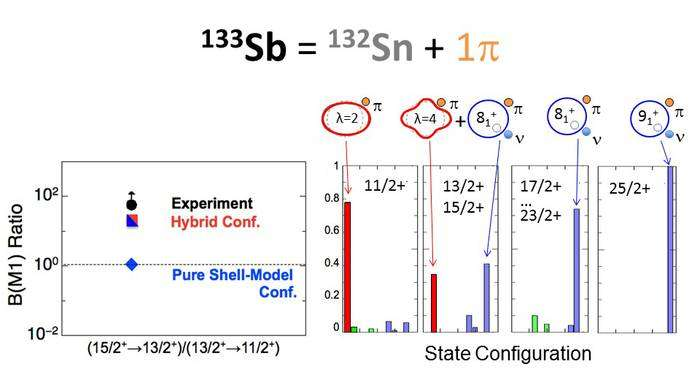 The intriguing interplay between collective and single-particle excitations in an exotic nucleus