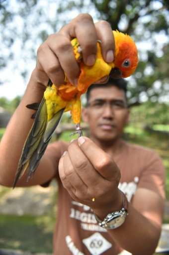 The jungles of the Indonesian archipelago are home to 131 threatened bird species, according to watchdog TRAFFIC, more than any