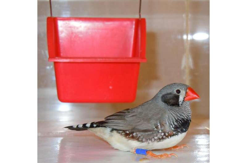 The magnetic compass of birds is affected by polarised light
