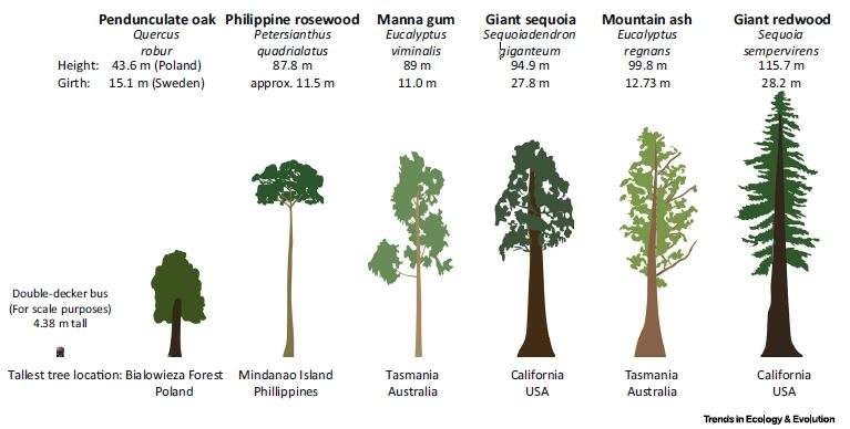 The unique challenges of conserving forest giants
