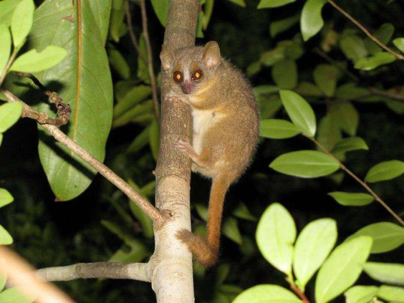 Three new primate species discovered in Madagascar