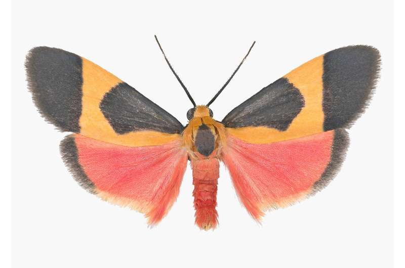 Tiger moths use signals to warn bats: Toxic not tasty