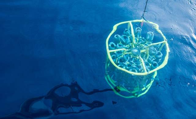 Tiny ocean organism has big role in climate regulation
