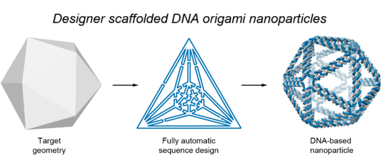 Top-down design brings new DNA structures to life