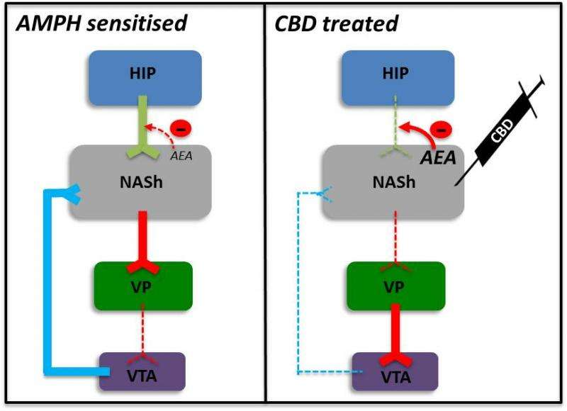 Totally dope! – A new antipsychotic mechanism of action for cannabidiol, by Anand Gururajan