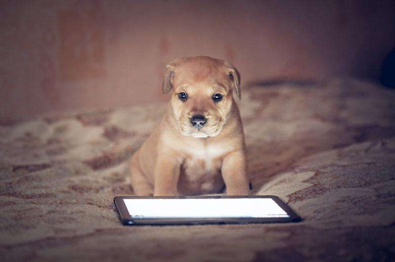 Touchscreens for dogs, wearables for chickens—welcome to the world of animal technology