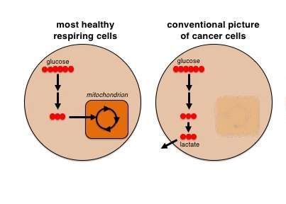 'Tracking bugs' reveal secret of cancer cell metabolism