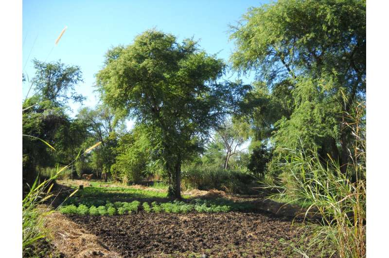 Trees on farms: The missing link in carbon accounting