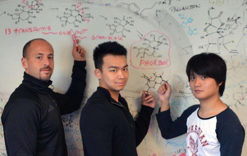TSRI chemists find a way to synthesize complex plant molecule phorbol and its derivatives