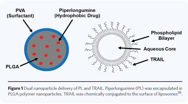 Two-stage nanoparticle delivery of piperlongumine and TRAIL anti-cancer therapy