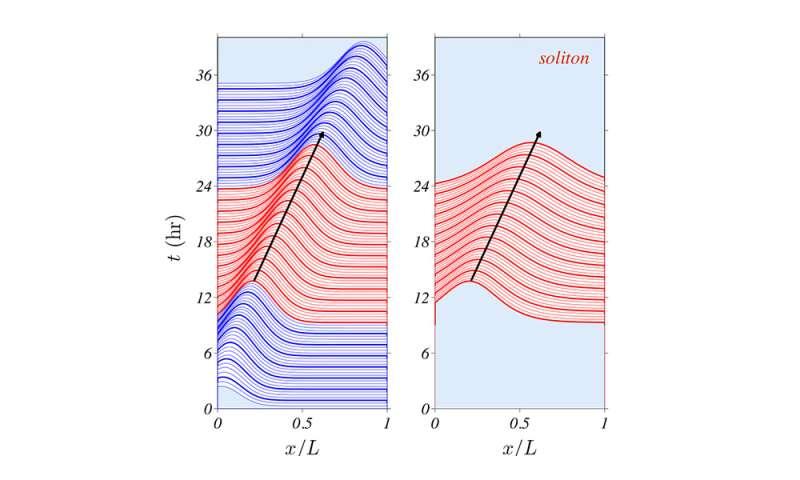 UC3M study applies math to describe tumor growth