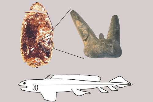 Unearthed: the cannibal sharks of a forgotten age
