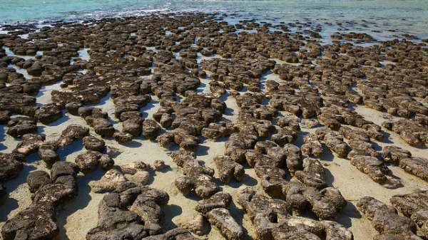Unlocking the secrets of Shark Bay's stromatolites