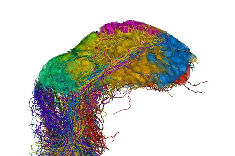 Unraveling complex neuronal networks