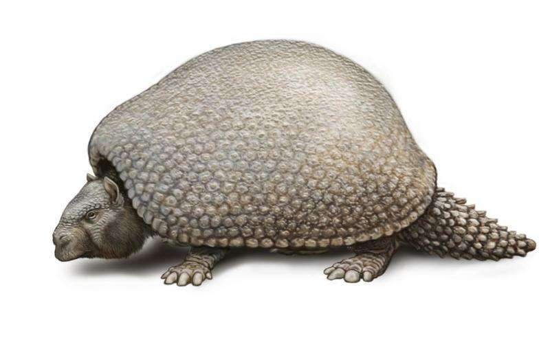 Using fossilized remains, scientists complete the mitochondrial genome of the glyptodont