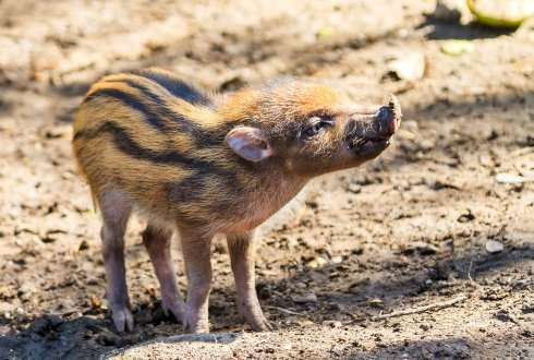 Using genomics to save endangered species