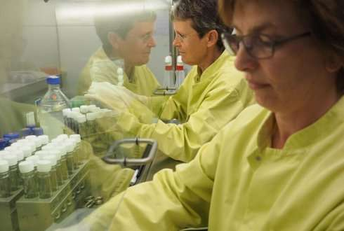 Vaccine stops Dutch elm disease