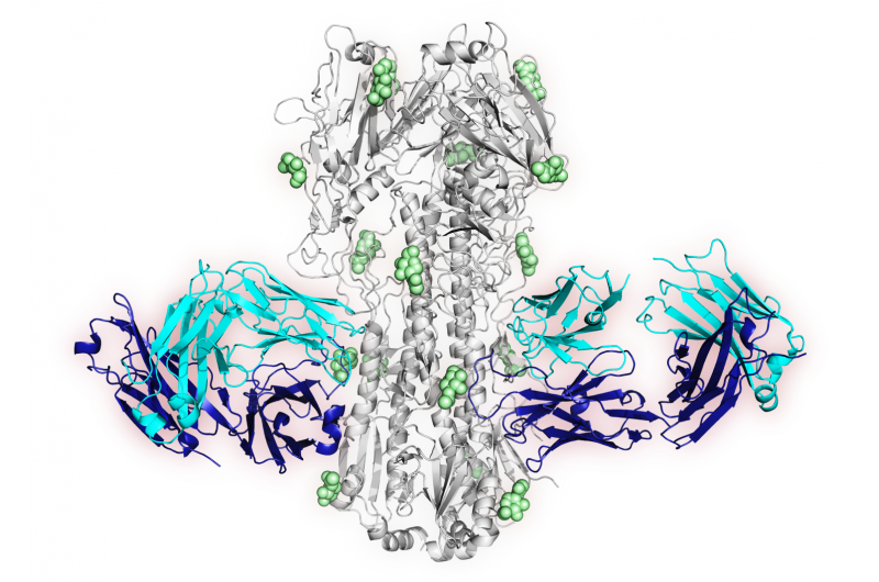 Vaccine strategy induces antibodies that can target multiple influenza viruses