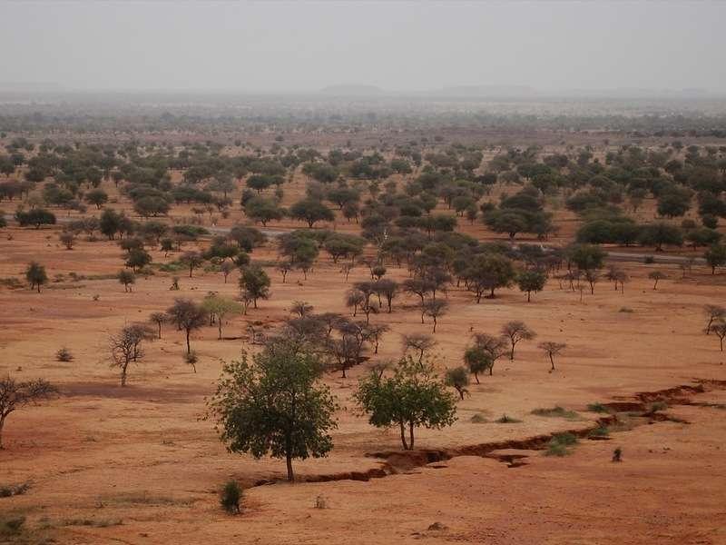 Warmer Mediterranean turns the Sahel green