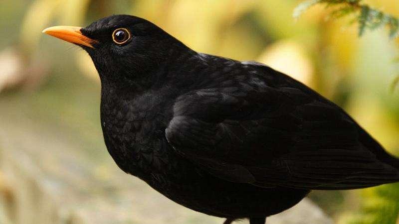 Warm springs, early laying don't harm bird flocks