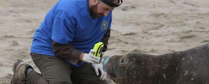 What elephant seals can tell us about using carbon monoxide to heal