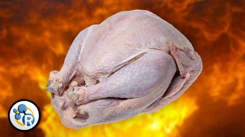 When turkeys explode (video)