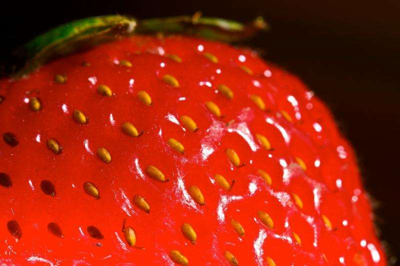 Why do strawberries have their seeds on the outside?