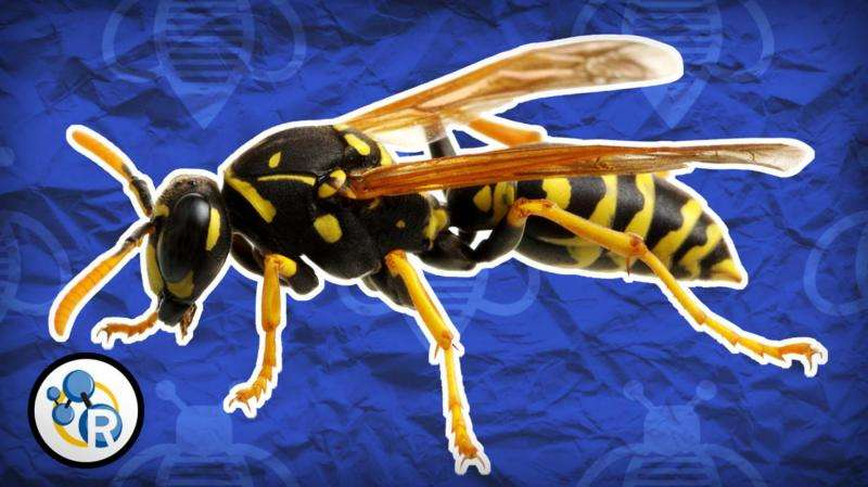 'Why do wasps attack?' and other chemistry questions answered (video)