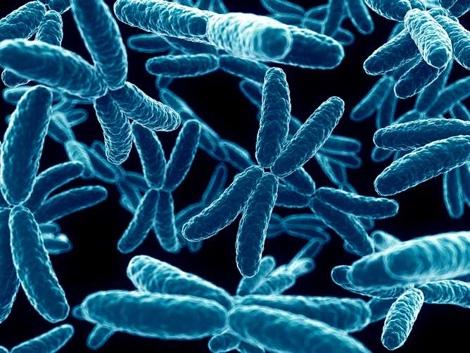 Why is the X chromosome so odd? Traffic analogy helped us crack the mystery