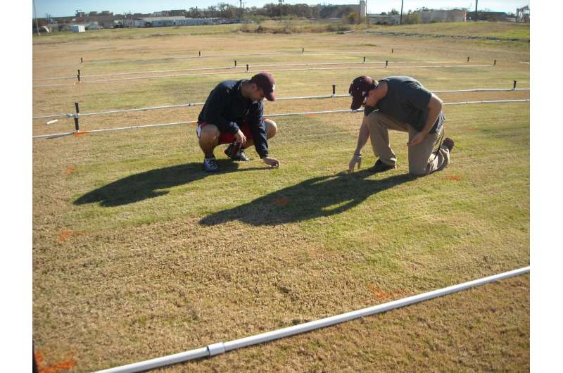 Winter overseeding and colorant treatments compared for bermudagrass