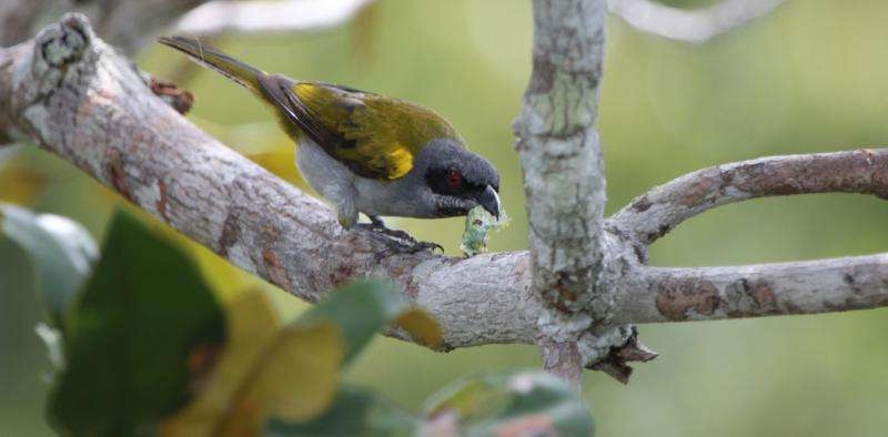 Without birds, tropical forests won't bounce back fromdeforestation
