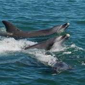 World's first project on dolphin gender sheds light on research