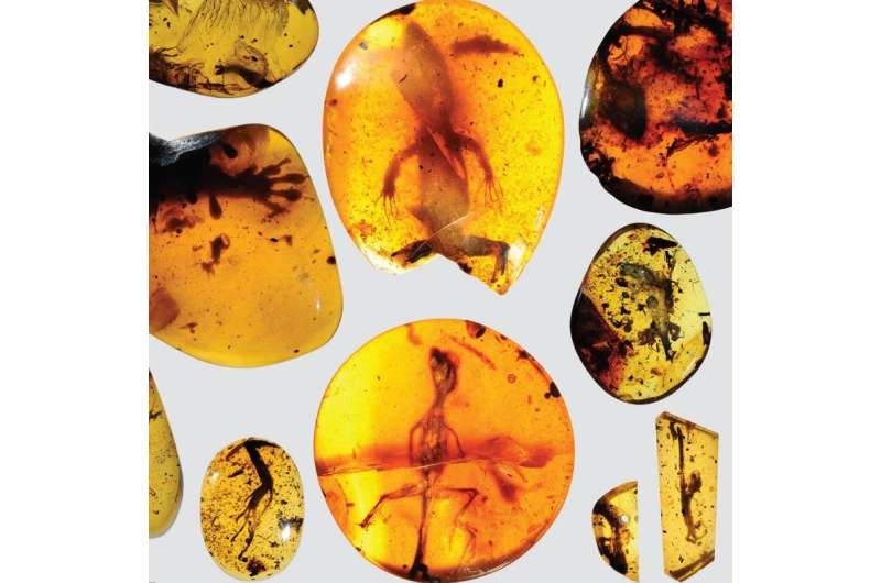 World's oldest chameleon found in amber fossil
