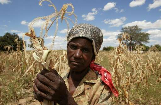 Zimbabwe has blamed low farm yields on erratic rains due to climate change, as well as crippling Western sanctions