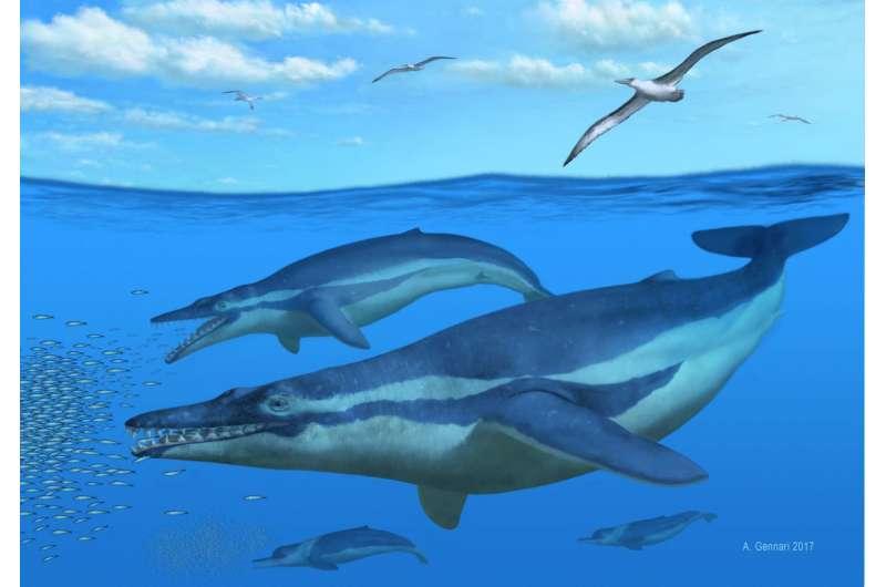 Ancient South Carolina whale yields secrets to filter feeding's origins