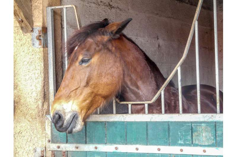 Animal welfare: Potential new indicator of chronic stress in horses