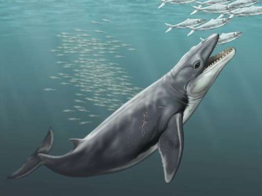 Australian researchers say ancient baleen whales had sharp teeth for hunting prey rather than using them as a sieve to filter fe
