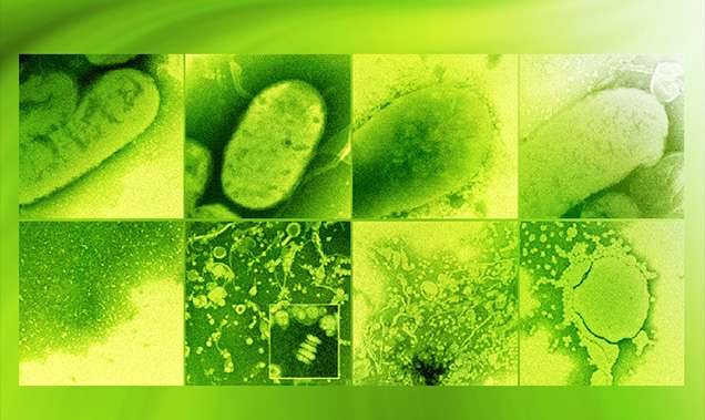 Bacterial cell wall changes produce more fatty molecules