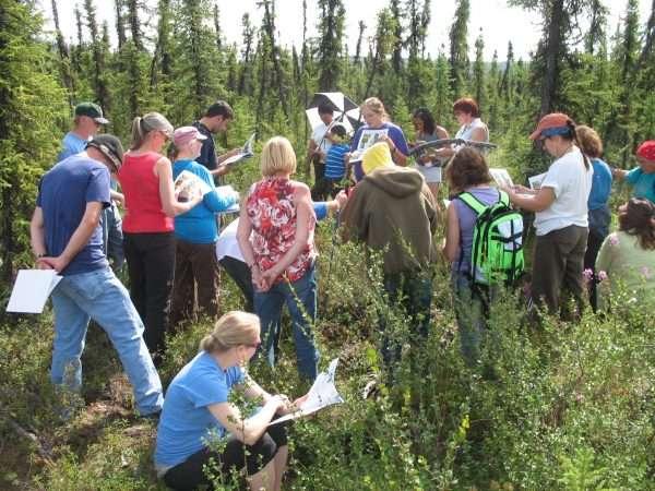 Berry research project seeks Alaskan volunteer citizen scientists