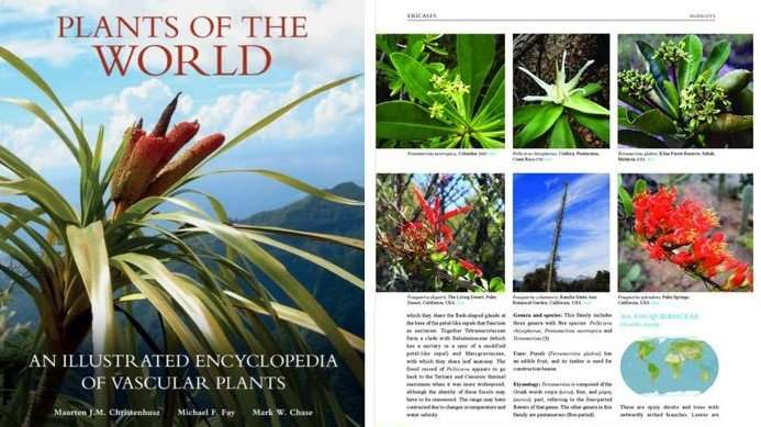 Book describes all 451 families of flowering plants, ferns, lycopods and gymnosperms