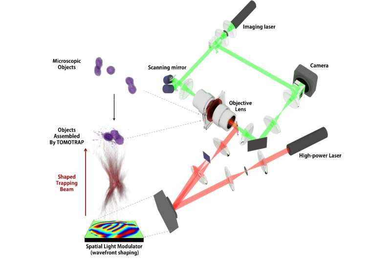 Controlling 3-D behavior of biological cells using laser holographic techniques